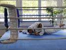 BJJ-Seminar mit Mario Goeckler - Auch im Boxring
